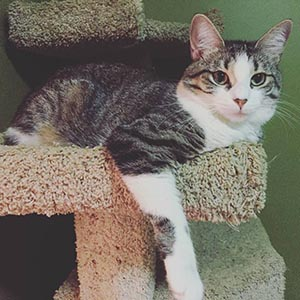 Cat/Kitten Adoption Fee